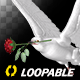 White Dove with Red Rose - Flying Loop - Side Angle II - VideoHive Item for Sale