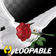 White Dove with Red Rose - Flying Loop - Side Angle - VideoHive Item for Sale