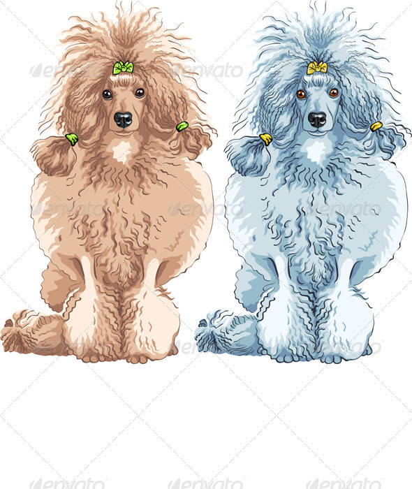 vector dog  Poodle breed sitting - Animals Characters