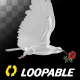 White Dove with Red Rose - Flying Loop - Side View - VideoHive Item for Sale
