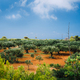 Greece islands landscape with agriculture fields of olives on red clay soil - PhotoDune Item for Sale