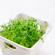 Sprouts of garden cress ready to eat - PhotoDune Item for Sale