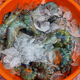 Tray with fresh indian prawns in a fishermen market in Cochin, India - PhotoDune Item for Sale