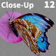 Butterfly Blue Morpho 12 - VideoHive Item for Sale