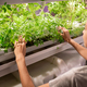 Grower checking seedling in hothouse - PhotoDune Item for Sale