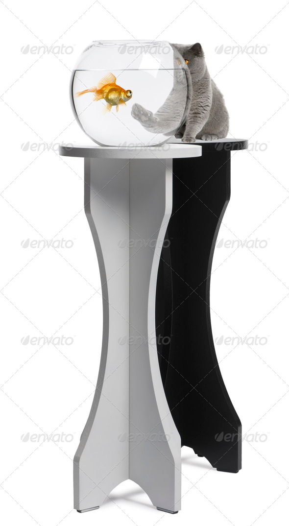 Cat looking at a fish in an aquarium on stand against white background - Stock Photo - Images