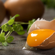 One cracked egg with yolk and fresh green oregano - PhotoDune Item for Sale