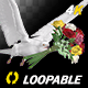 Dove with Bouquet - 4K Flying Cycle - Side Angle - VideoHive Item for Sale