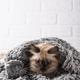Little funny kitten on knitted plaid - PhotoDune Item for Sale