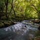 Mystic Mood in a River among Old Oaks - PhotoDune Item for Sale