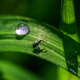 Tiny Beetle on a Blade of Grass next to a Dew Drop - PhotoDune Item for Sale
