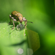 A Beetle Drinking from a Drop of Rain Water - PhotoDune Item for Sale