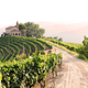 Landscape with vineyards and church - PhotoDune Item for Sale