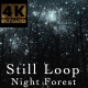 Night Forest V1 Still - VideoHive Item for Sale
