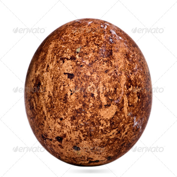 Egg of Caracaras Southern in front of white background - Stock Photo - Images