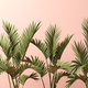 Palm leafs on pink background 3D illustration - PhotoDune Item for Sale