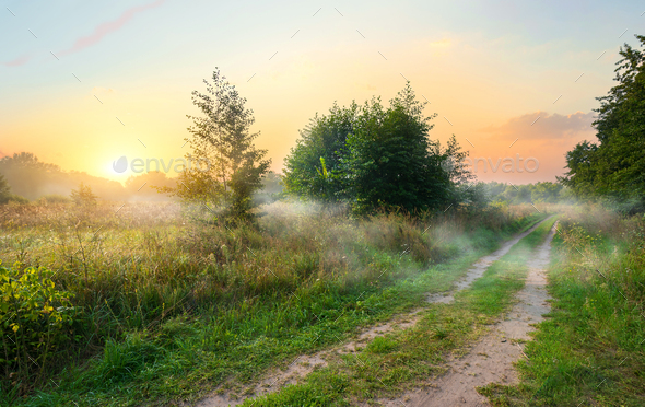 Spring field at sunrise - Stock Photo - Images