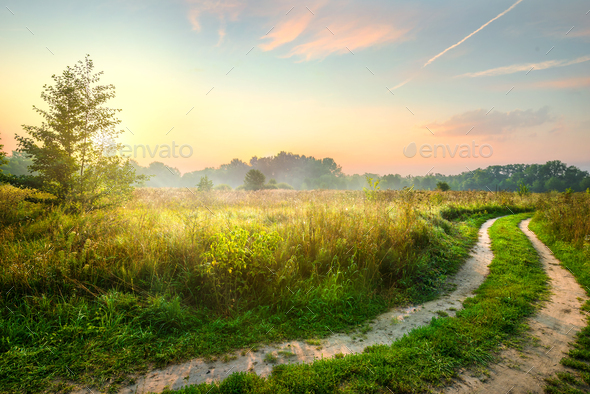 Road and spring field - Stock Photo - Images