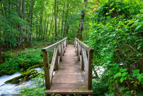 Bridge over Tara river - Stock Photo - Images