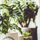 Potted green plants on window. Home decor and gardening concept - PhotoDune Item for Sale