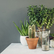 Collection of various cactus and succulent plants - PhotoDune Item for Sale
