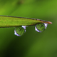 Inverted Refraction of a Garden inside Two Raindrops - PhotoDune Item for Sale