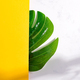 Natural backdrop from green tropical Monstera leaf on a duotone yellow white background with soft - PhotoDune Item for Sale
