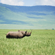 White rhinoceros in the grass - PhotoDune Item for Sale