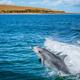 Dolphin Jump - PhotoDune Item for Sale