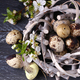 Composition with Quail Eggs - PhotoDune Item for Sale