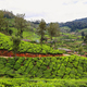 Tea plantations between Yellapatty and Top station in Munnar, Kerala, India - PhotoDune Item for Sale