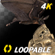 Bat with Skull - 4K Flying Loop - Side Angle - VideoHive Item for Sale