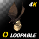 Bat with Skull - 4K Flying Loop - Back Angle - VideoHive Item for Sale