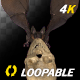 Bat with Skull - 4K Flying Loop - Front View - VideoHive Item for Sale