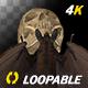 Bat with Skull - 4K Flying Loop - Top View - VideoHive Item for Sale
