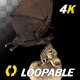 Bat with Skull - 4K Flying Loop - Side View - VideoHive Item for Sale