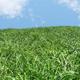 Grassland VRay Render Setup