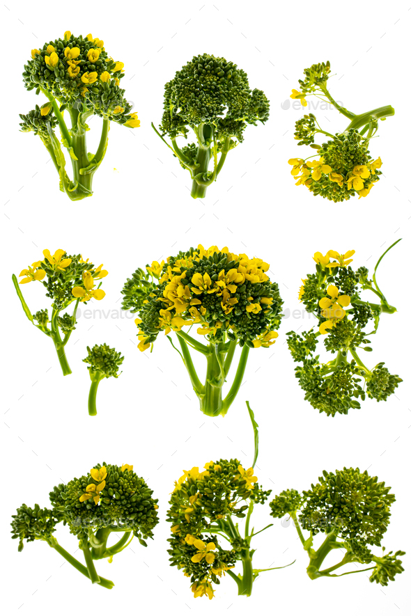 Broccoli flowers isolated - Stock Photo - Images