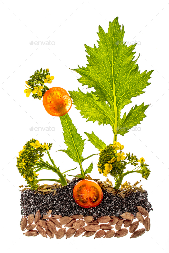 Healhty food concept - Stock Photo - Images