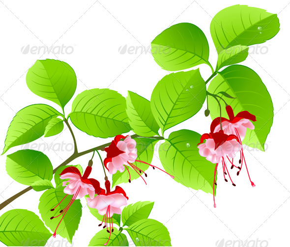 Green Flowering Branch of Tropical Tree - Flowers & Plants Nature