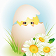 Chick - GraphicRiver Item for Sale