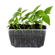 Green pepper seedlings growing in plastic container - PhotoDune Item for Sale
