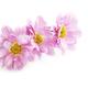 Pink flowers - PhotoDune Item for Sale