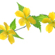 Yellow flower - PhotoDune Item for Sale