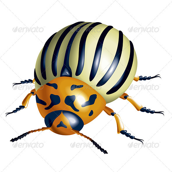 Colorado Potato Beetle - Animals Characters