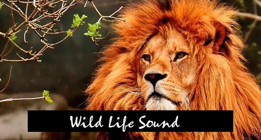 Wild life sounds