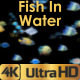 Fish Slowly Swiming - VideoHive Item for Sale