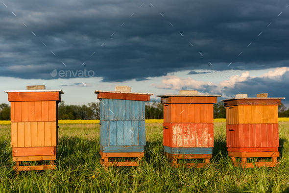 Colorful Wooden Beehives in Fields. Organic Honey Production. Beekeeping and Apiary Concept - Stock Photo - Images
