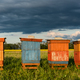 Colorful Wooden Beehives in Fields. Organic Honey Production. Beekeeping and Apiary Concept - PhotoDune Item for Sale