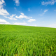 Green Wheat or Grass and Blue Sky with Clouds. Farmland or Countruside Rural  Landscape - PhotoDune Item for Sale